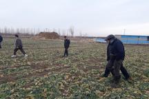 کارشناسان خارجی از مزارع تکثیر بذری کلزا در قزوین بازدید کردند