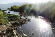 ورود فاضلاب، حیات دریاچه زریبار را تهدید می کند