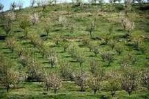 300 هکتار زمین شیب دار در خراسان شمالی برای توسعه باغ اجرایی شد