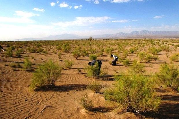 رئیس حفاظت منابع طبیعی سمنان: کانون آلودگی ملخ پنج هزار هکتار است
