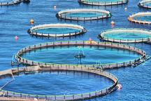 مجوز حمل و ذخیره سازی ماهی در سیستان و بلوچستان صادر شد