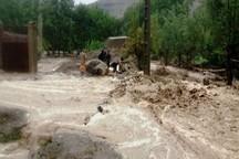سیلاب به کشاورزی تایباد خسارت وارد کرد