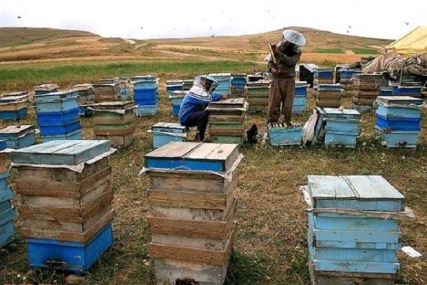 سرشماری زنبورستان های مهاباد آغاز شد