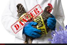 ستاد پیشگیری از شیوع آنفولانزای مرغی در شهرستانهای خوزستان تشکیل میشود