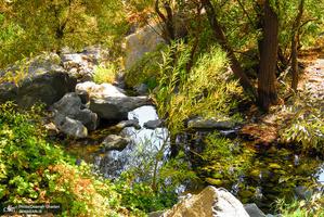 طبیعت پاییزی دارآباد تهران