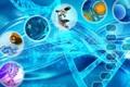 هشتمین همایش بیوانفورماتیک ایران در دانشگاه زابل برگزار می شود