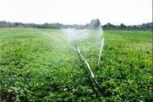 سطح کشت بهاره در سمنان 6 درصد کاهش یافت