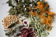 عطاری ها تنها مجاز به عرضه گیاهان دارویی فرآوری نشده هستند