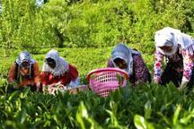 مدیر تعاون روستایی سمنان: جایگاه تعاونی ها در اقتصاد کمرنگ است