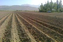 3 هزار هکتار از زمینهای کشاورزی آماده بهره برداری است