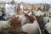 شهرداری خاش دام قربانی برای کارکنانش را از عشایر تامین کرد