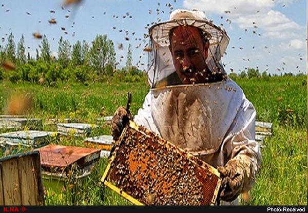تولید۳۰ درصد عسل کشور در آذربایجان غربی  80 درصد شیر کشور از دامداران سنتی است