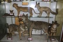 موزه تاریخ طبیعی و تنوع زیستی فرصتی برای معرفی حیات وحش البرز
