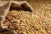 کشاورزان خراسان شمالی رغبت کمتری به فروش جو با قیمت تضمینی دارند