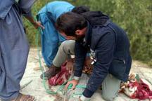 تمساح سرگردان در راسک به زیستگاه طبیعی اش بازگشت