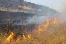 ۳ هزار مترمربع از گونزارهای شیروان در آتش سوخت