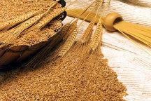 رکورد افزایش تولید غلات در جهان باعث کاهش بهای مواد غذایی شد