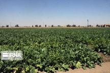 ۲۰ درصد محصولات کشاورزی در چهارمحال و بختیاری تولید میشود