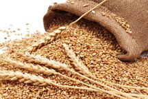 70 درصد گندمکاران کردستان مطالبات خود را دریافت کردند
