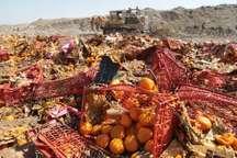 7.5تن انواع میوه قاچاق  در مشهد امحاءشد