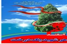 رئیس اداره منابع طبیعی: طرح هر شهید یک درخت در تکاب اجرا می شود