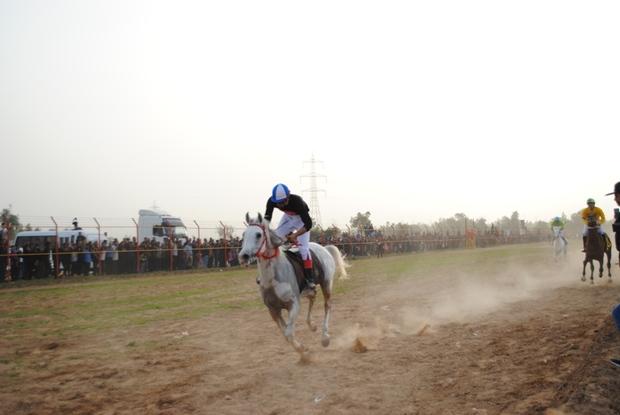 هفته دوم کورس اسب دوانی قهرمانی خوزستان در دزفول برگزار شد