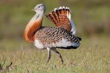 12 گونه جانوری همدان در فهرست قرمز جهانی