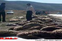 کشف محموله کالا و گوسفند قاچاق چهار میلیاردی در یزد