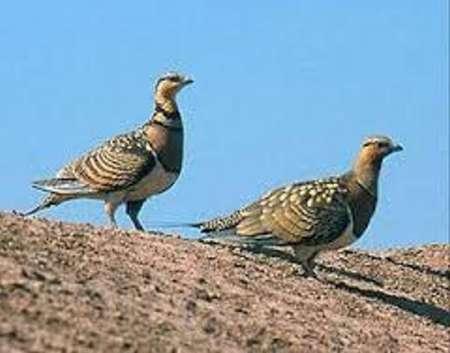 تیمارداری پرنده مصدوم در محیط زیست غرب گلستان