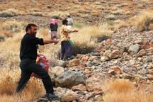 بذرپاشی در 50 هکتار مراتع شهرستان مهریز آغاز شد