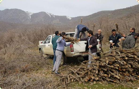 بیش از هشت متر مکعب از درختان جنگلی مریوان قطع شد