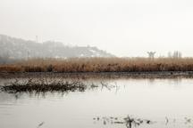 نیزارهای دریاچه زریبار مریوان 30 هکتار عقب نشینی کرد