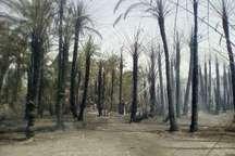 112نخل در منطقه بگان قصرقند سیستان و بلوچستان براثر گرما در آتش سوخت