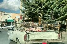 رکود کشتارگاه صنعتی، حمل و توزیع گوشت ایلام را مختل کرده است