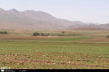 گندم زارهای بجنورد از سطح سبز مطلوبی برخوردار نیست