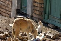 راه های رفته و نرفته برای دفع حیوانات مزاحم در شهر جهرم
