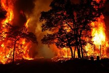 85 درصد آتش سوزی جنگل ها منشا انسانی دارد