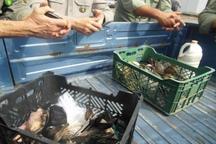 پرندگان زنده در بازار لنگرود، کشف و در طبیعت رهاسازی شدند