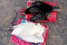سه شکارچی غیرمجاز در اروندکنار آبادان دستگیر شدند