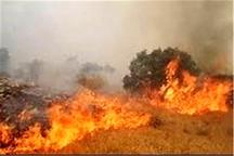 آتش سوزی جنگلهای بدره عمدی است     خشکسالی هم مقصر است