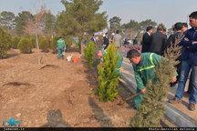کاشت درخت چنار در خیابان ولیعصر