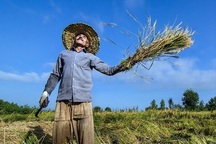 115درصد تعهد اشتغال کشاورزی خوشاب محقق شد