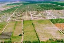 30 درصد اراضی زراعی سبزوار زیر پوشش بیمه قرار دارد