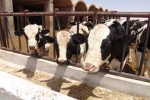 تولید 105 هزار تن محصول دامی در شهرستان ابرکوه