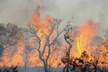 آتشسوزی جنگلهای منطقه «وزگ» بویراحمد مهار شد