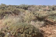 مشکل توسعه معدنی در آذربایجان غربی منابع طبیعی است