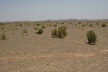 20 میلیارد ریال به طرح ترسیب کربن در خراسان رضوی اختصاص یافت