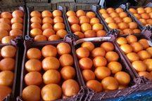 توزیع میوه عید نوروز 10 روز دیگر آغاز می شود