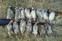 دستگیری شکارچیان غیر مجاز حیات وحش در دهلران