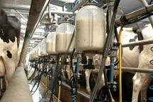 چهارمحال و بختیاری رتبه دوم سرانه تولید شیرخام را دارد
